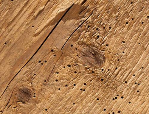 I tarli del legno